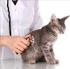 Ветеринарные клиники в Благодарном